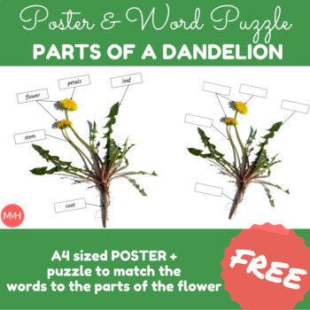 Parts of a Dandelion - Poster and Puzzle