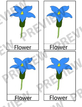 Montessori 3 Part Cards (Parts of a Flower)