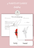 Montessori 3 Part Cards - Parts of a Ladybug