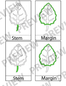 Montessori 3 Part Cards (Parts of a Leaf)