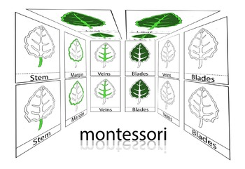 Montessori 3 Part Cards (Parts of a Leaf)