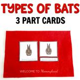 Montessori 3 Part Cards: Types of  Bats