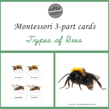 Montessori 3-Part Cards - Types of Bees