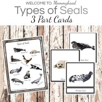 Montessori 3 Part Cards: Types of Seals