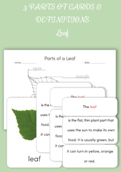 Montessori 3 Part Cards and Definition Cards - Parts of the leaf
