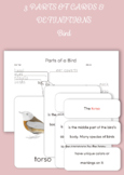 Montessori 3 Part Cards and Definitions - Parts of a Bird