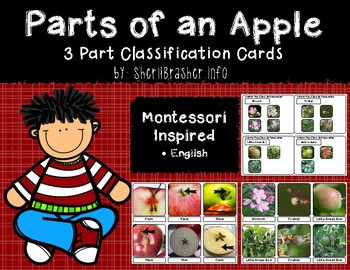 Montessori 3 Part Classification Cards: Parts of an Apple - English Pack