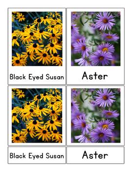 Montessori 3 Part Flower Cards
