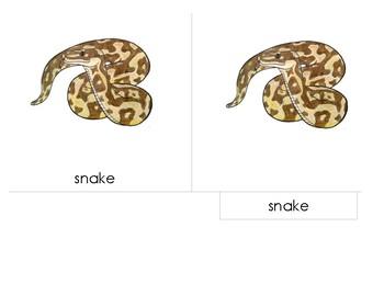 Parts of the Snake - Montessori 3 Part Scientific Nomenclature Cards