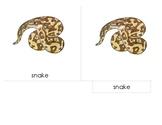 Parts of the Snake - Montessori 3 Part Scientific Nomencla