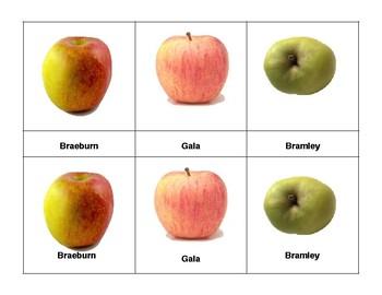 Montessori 3 part  Language Cards - Apples