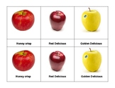 Montessori 3 part  Language Cards - Apples