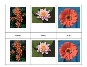Montessori 3 part Language Cards - Flowers