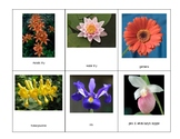 Montessori 3 part Language Cards - Flowers