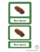 Montessori 3-part cards, Types of Pinecones