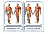 "Montessori 3 part cards for: ""Muscular System"""