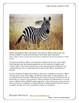 Montessori Africa Art Safari Metal Inset 3 Lessons Drawing Lion Zebra Giraffe