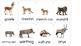 Montessori African Animal Matching Cards