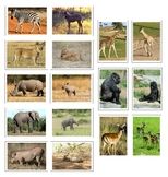 Montessori AFRICAN ANIMAL Matching Cards-Parent to Baby-Science, Zoology