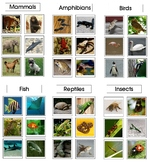 Montessori Animal Class Sorting, Category Cards - Science, Zoology, Biology