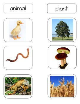 Montessori Animal or Plant Classification