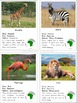 Montessori Animals of Africa 3 Part Cards with Fact Cards