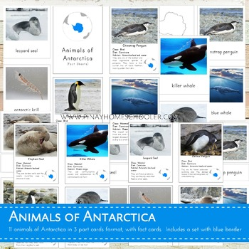 Montessori Inspired Animals of Antarctica 3 Part Cards and Fact Cards