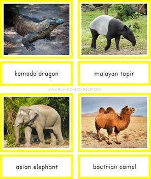 Montessori Animals of Asia 3 Part Cards and Fact Cards