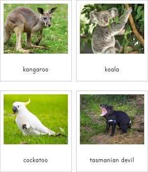 Montessori Animals of Australia 3 Part Cards and Fact Cards