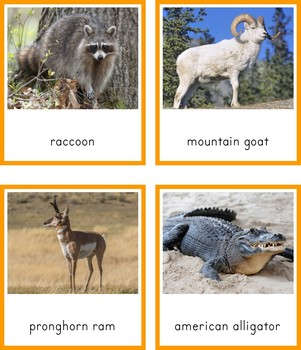 Montessori Animals of North America 3 Part Cards and Fact Cards