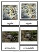 Montessori Animals of the Desert 3 Part Cards