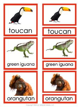 Montessori Animals of the Rainforest 3 Part Cards