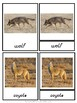 Montessori Animals of the Temperate Grassland 3 Part Cards
