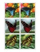 Montessori BUTTERFLY Animal Matching Cards-Science, Zoology, Memory Match