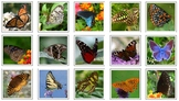 Montessori BUTTERFLY Animal Matching Cards-Science, Zoolog