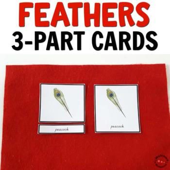 Montessori Bird Activities - Types of Feathers 3 part cards