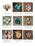 Montessori Birds Eggs 3 Part Cards Language Reggio Mixed Media Art Idea