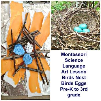 Montessori Birds Nest Art Lesson Eggs 3 Part Cards Language Reggio