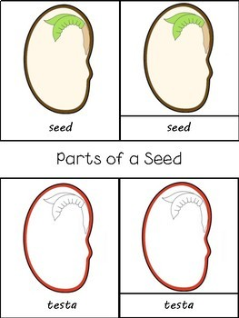 Montessori Botany 3 Part Cards Set