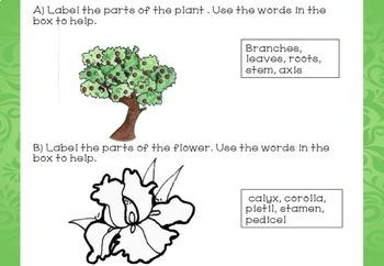 Montessori Botany Test for assessment