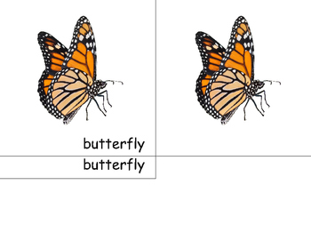 Montessori Butterfly- 3 part cards