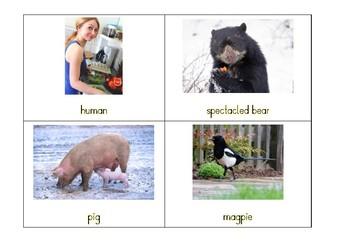 Montessori Classification: Mammals by Diet