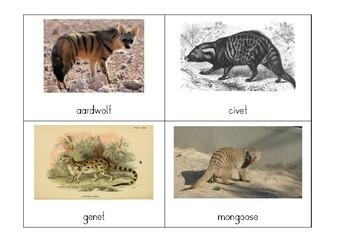 Montessori Classification: Types of Carnivorans