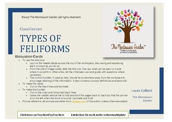 Montessori Classification: Types of Feliforms