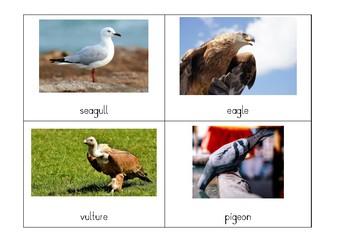 Montessori Classification: Types of Vertebrates