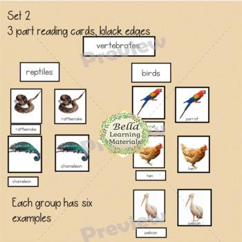 Montessori - Classification of Vertebrates