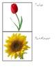 Montessori Classified Cards - Flowers