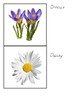Flowers - Montessori Classified Cards
