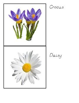 Montessori Flowers Classified Cards