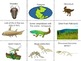 Montessori Clock of Eras features of each Geological era picture edition